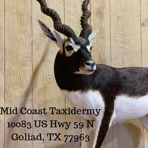 Mid Coast Taxidermy 10083 US Hwy 59 N Goliad, TX 77963